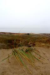 Seegras (claudipr0) Tags: lettland baltikum latvia strand ostsee sea beach balticsea saulkrasti