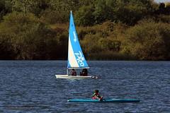 J78A0071 (M0JRA) Tags: birds flight flying wildlife rats walks gardens parks fields trees lakes ponds ducks swans rspb