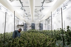 Cannabis Grow Room with fabric ducts 2 with hvls fan (prihodafabricduct) Tags: cannabis cultivation weed growroom agriculture medical marijuana grow room air hvac distribution dehumidify climate control indoor farming container environment
