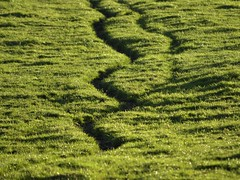 BeatenTrack (Tony Tooth) Tags: nikon d7100 nikkor 55300mm green field farming track path animaltrack beatentrack rudyard staffs staffordshire