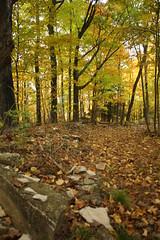 IMG_6321 (sjj62) Tags: fishcreekwi doorcountywi fall autumn woods doorcounty fishcreek 40d