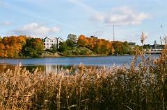 Töölönlahti (EsaGraf 35mm) Tags: autumn foliage fall filmphotography töölönlahti helsinki agfavista400