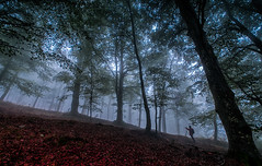 the photographer (juan luis olaeta) Tags: paisajes landscape lightroom photoshop fog foggy fotografa laiñoa nieblas forest bosque pagoa basoa