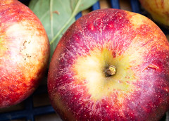 Apples 5 (S's images) Tags: west dean garden autumn harvest apples kitchen fruit orchard red
