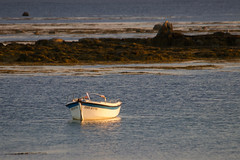 IMG_9814 (MarieAnneTH) Tags: bretagne finistere penmarch