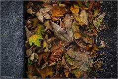 down in the gutter (geka_photo) Tags: gekaphoto kiel schleswigholstein deutschland rinnstein herbst laub blätter strase