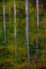 (Topolino70) Tags: canon5dmarkiv lake water reflection pole nature green stone