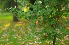 Between two seasons (Baubec Izzet) Tags: baubecizzet pentax bokeh leaves nature park autumn flickrunitedaward