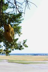 Ho perdonato, ho dimenticato (Cristina Seguiti) Tags: tree sky landscape paesaggio cappello hat lost perdere dimenticare forget forgive perdonare lasciare leave scordare