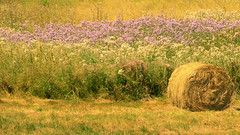 A summer in the country (Valérie C) Tags: auvergne france agriculture country bundle white grass haystack summer yellow purple flower nature