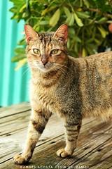 #gato #cat #altosdechavon #mascota #Amoloquehago la belleza de la naturaleza. (ramsesmiguel23) Tags: gato amoloquehago altosdechavon mascota cat