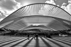 FRL_3638-2 (fred9210) Tags: nikon 20mm archi liege belgium station calatrava sun monochrom