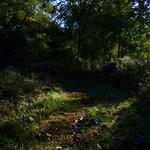 Highland Park Meadows trail thumbnail