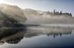 Flying through the Mist (Tracey Whitefoot) Tags: 2018 tracey whitefoot october autumn fall cumbria lake district lakes national park misty mist morning derwentwater derwent water reflection reflections keswick light calm still