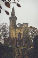 IMG_5599.jpg (keithr™) Tags: leaves starred glen abbey autumn dunfermline scotland unitedkingdom gb