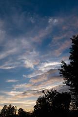 DSCF0683-2 (jojotaikoyaro) Tags: zenpukuji suginami tokyo japan landscape nature fujifilm x100f sunset