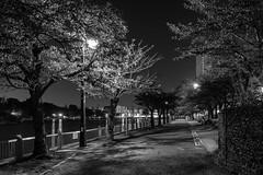 Path (tokyobogue) Tags: tokyo japan ukimafunado ukimakoen koen park nikon nikond7100 d7100 sigma sigma1750mmexdcoshsm blackandwhite blackwhite monochrome night dark shadows