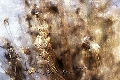 DAY 278. end of summer . . . (Small and Beautiful) Tags: summer earth weeds dry autumn beauty texture warm bokeh nature artistic interpretation