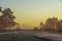 _IMG2353 (2) (Henk de Regt) Tags: the netherlands gelderland natuur nature landscape grass bos forest trees zonsopkomst sunset sundown zonsondergang swamp nederland veluwe landschap gras water bomen moeras