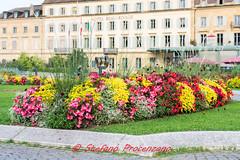 Neuchâtel, aiuole fiorite. (Stefano Procenzano) Tags: neuchâtel ne svizzera ch cantonneuchâtel nikond600 d600 nikon zeissmilvus50mmf14distagon zeiss milvus1450 zf2 milvus 50mm f14 50mmf14 manualfocuslens mflenses fiori flowers fleurs