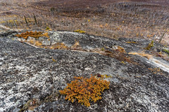 'Tower Hill' (Canadapt) Tags: rock cliff shrub trees burnt forest fire lichen nwt canadapt