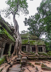 Ta Prohm temple overgrown with tree roots, Siem Reap Province, Angkor, Cambodia (Eric Lafforgue) Tags: abandoned ancientcivilisation angkor angkorwat apsara archaeology architecture artscultureandentertainment asia beautyinnature buddhism buddhist builtstructure cambodia colourimage environment famousplace history indochina khmer lush majestic monument nopeople oldruin outdoors rediscovered religion root ruin southeastasia spirituality temple templebuilding tetramelesnudiflora traditionallycambodian tranquility travel traveldestinations tree unescoworldheritagesite vertical wat yasodharapura camboimg9658 siemreapprovince