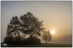 """""""Wenn die Sonne mit dem Morgennebel kämpft"""" (anton_zach) Tags: waldviertel sonne sonnenaufgang natur nebel landschaft licht baum bäume himmel holz herbst color colors outdoor weitra spital"""