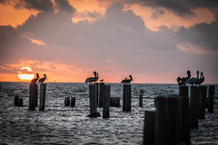 Pelicans perch (Jims_photos) Tags: fultontexas water texas unitedstates outdoor outside pelicans adobelightroom shadows sunnyday sunrise daytime docks gulfofmexico jimallen jimsphotos jimsphotoswimberleytexas lightroom texascoast cloudy coastalscene nopeople nikond750 morninglight
