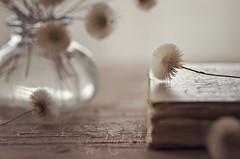 Dandelions (Ali Llop) Tags: flower book romantic nobody dandelion old nature table beautiful retro wooden vintage closeup golden vase creative stilllife elegance antique