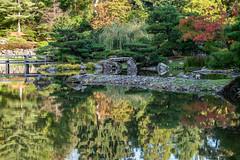 Japanese Garden (jeff's pixels) Tags: seattlejapanesegarden garden japanese seattle city pnw washington arboretum reflection fall autumn color nature bird bus train nikon d850
