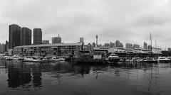 Wharf 10 (Marine Explorer) Tags: marine coastal australia marineexplorer