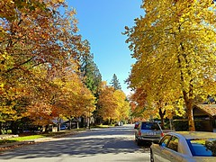 A suburban street in fall (walneylad) Tags: westlynn northvancouver britishcolumbia canada october fall autumn sun bluesky colour color yellow green brown orange red leaves branches trees ferns woods woodland suburbs suburbia neighborhood nature view scenery