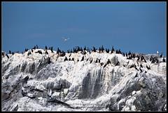 2018_июль_Поной_3_115 (Snowman_pro) Tags: flight kolapeninsula nord sea summer water вода кольскийполуостров лето море полёт сосновка белоеморе whitesea
