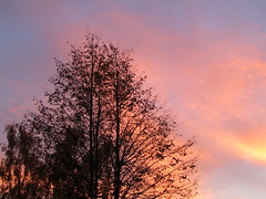 moment of sunset (VERUSHKA4) Tags: sky ciel vue view city ville canon europe russia sunset moscow sunlight pink color colour cloud purple tree branch bough trunk silhouette autumn october fall season light beautiful outdoor papk parkkuskovo evening