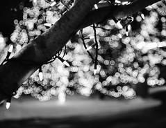 Holiday Blur (HW111) Tags: christmas bw blackandwhite bokeh holiday lights monochrome path trees explore20181209 night