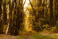 Осенними тропами / By autumn pahts (Владимир-61) Tags: осень октябрь природа роща тропа свет autumn october nature grove path light sony ilca68 minolta28135 natureinfocusgroup