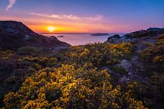 Howth Sunset Ireland (ronnevinkx) Tags: bloei dublin eiland geel gelebloemen ierland iersezee landschap paars zee