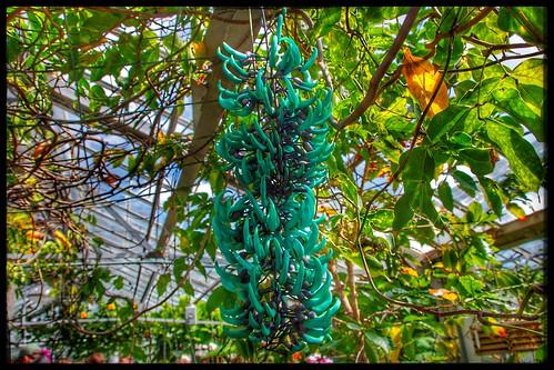 Toronto Ontario - Canada - Allan Gardens Conservatory - Toronto Tropical Garden -  Banana Tree