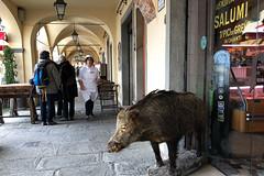 Salumi (Anna-logisch) Tags: wildschwein metzgerin street iphone salami salumi chianti toskana wildboar butcher italy