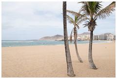 Playa Las Canteras (epha) Tags: canarias canaryislands grancanaria kanarischeinseln palmen palmtrees