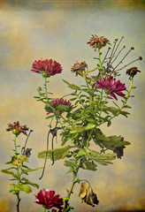 hanging on (jjdraft) Tags: topaz bokeh texture flowers
