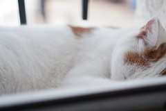(louis_de_fines) Tags: nice lovely beautiful tired mignon chat cat animal hair roux ginger white snow hear sleep sleeping portrait closer sony a6000 ilce 35mm f18 18 oss window nap