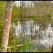 Soos Creek Wetland