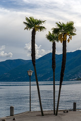 Palm Trees (Bephep2010) Tags: 2018 7markiii alpen alpha ascona frühling ilce7m3 lagomaggiore lakemaggiore palme sel24105g schweiz see sony switzerland tessin ticino ufer wald wasser alps forest lake palm shore spring water ⍺7iii ch