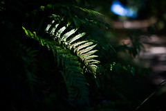 just a little light.. (paul.wienerroither) Tags: light plant nature leaves leaf lightanddark natureshots naturephotography summer austria forest woods green greenisbeautiful photography canon 50mm 5dmk3 niftyfifty beautiful summerdays walking wanderer plants walk