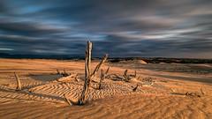 Enduring the elements (Chas56) Tags: ngc sand dunes landscape canon canon5dmk4 sanddunes bigdrift wilsonsprom victoria australia wilsonspromontory longexposure nd filter sunset