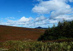 """ Coming Home From the Hill "" ("" P@tH Im@ges "") Tags: bracken heather sugarloafmountain view deertrack sky fineday glasnamullenwood roundwood ballinastoe home co wicklow ireland planxty liamoflynnrip"