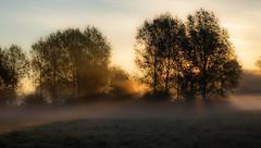 the hanging autumn mist...Boxmoor (petegatehouse) Tags: autumn hanging trees am