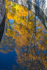 Reflection Of Autumn Trees In A Pond (AudioClassic) Tags: colors photographythemes photography nopeople autumn colorimage day plant tree lushfoliage season forest woodland landscape nationalpark footpath parkmanmadespace september october branch leaf hiking shade comfortable goldcolored beechtree falling relaxation tranquilscene yellow orangecolor greencolor environment nature outdoors horizontal november estonia pondwater reflections