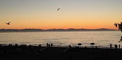 HORIZON (Pierre♪ à ♪VanCouver) Tags: georgiastrait sea mar zee mare canada 海 mope vancouver clothingoptional seagull hightide maréehaute